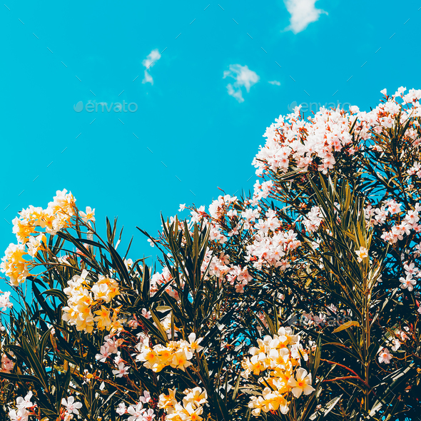 Flowers and sky. Minimal style - Stock Photo - Images