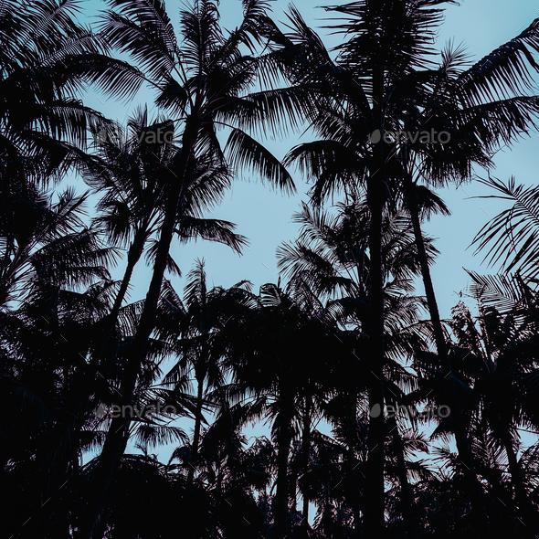 Palms Minimal art design Print style - Stock Photo - Images