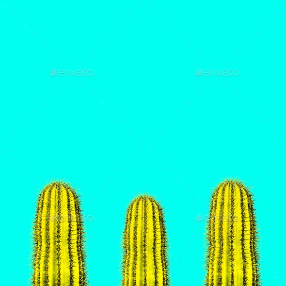Cactus set. Minimal creative stillife - Stock Photo - Images