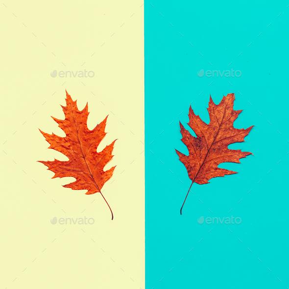 Leaf Autumn season Minimal art design - Stock Photo - Images