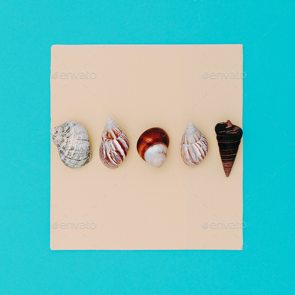 Set shells Beach sea style. Minimal - Stock Photo - Images