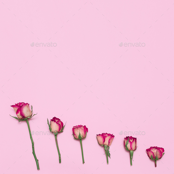 Minimal creative design. Roses. Spring Summer. Art Help - Stock Photo - Images