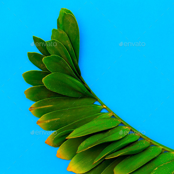 Tropical palm leaf Minimal Art - Stock Photo - Images