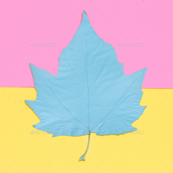 Leaf fall. Art gallery Minimal - Stock Photo - Images