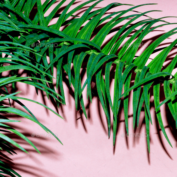 Tropical plant on pink. Minimal fashion art design - Stock Photo - Images