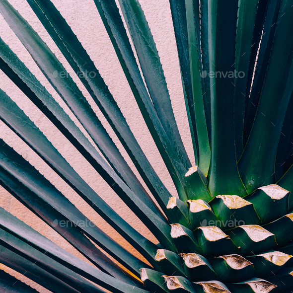 Plant on pink. Tropical design minimal fashion art  Love Green - Stock Photo - Images