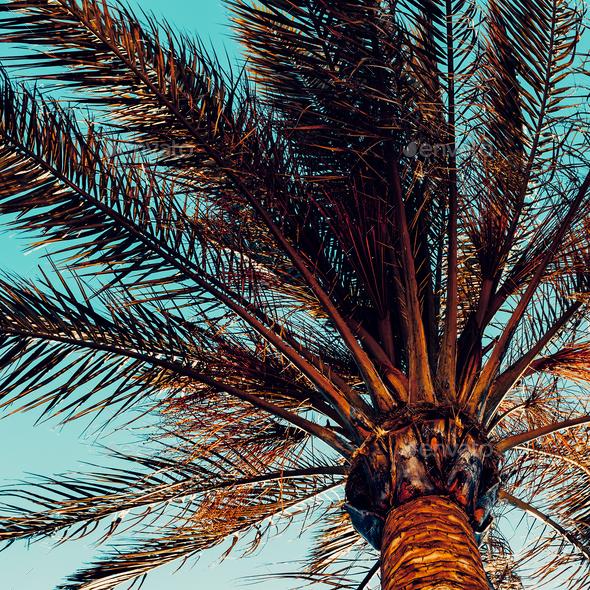 Palm background. Minimal style - Stock Photo - Images