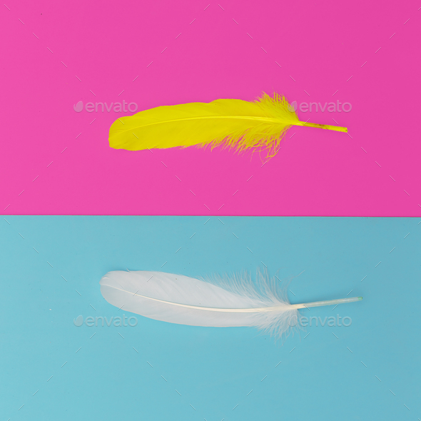 Feathers minimal art design fashion - Stock Photo - Images