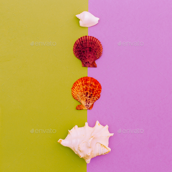 Set shells. Ocean style. Minimal art fashion design - Stock Photo - Images