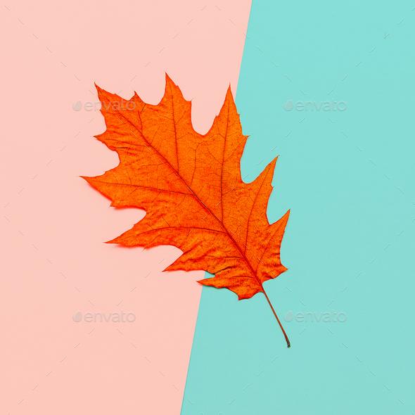 Autumn Leaf Herbarium Minimal art - Stock Photo - Images