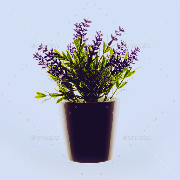 Flower in a pot. Decor. Minimal Flat lay design - Stock Photo - Images