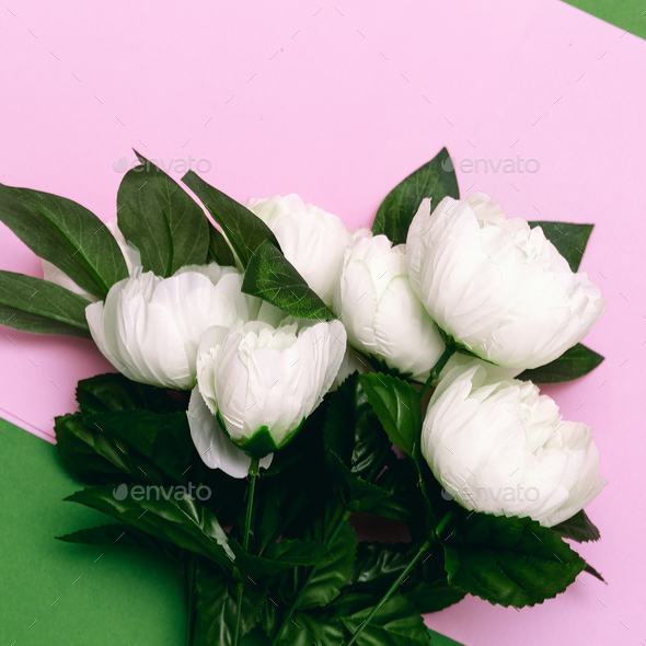 Bouquet of white roses on pink minimal art design - Stock Photo - Images