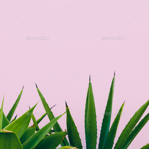 Plant o pink. Outdoors. Minimal design. Fashion for prints - Stock Photo - Images