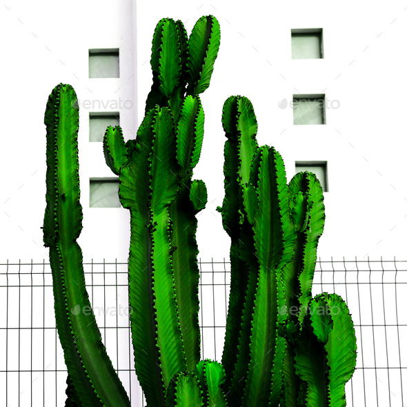 Tropical Urban minimal art. Cactus and white location - Stock Photo - Images