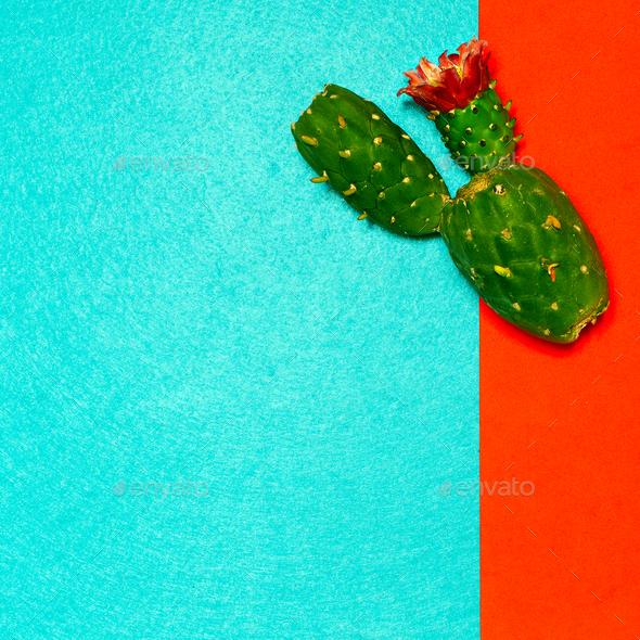 Cactus plant minimal design - Stock Photo - Images