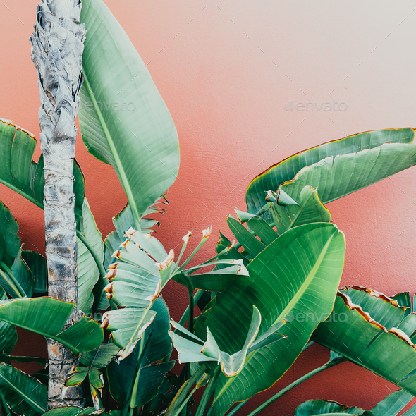 Tropical greens on a pink. minimal art design Fashion photo prin - Stock Photo - Images