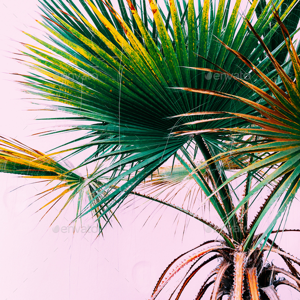 Palm on pink. Tropical design minimal fashion - Stock Photo - Images