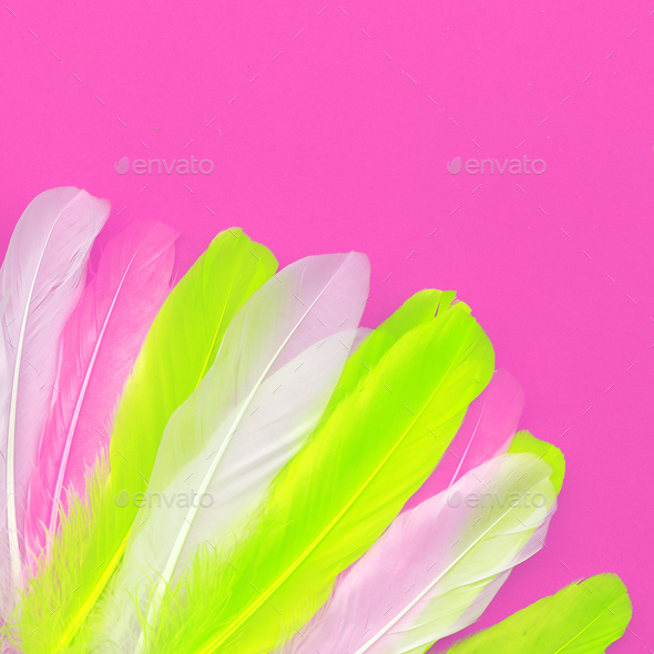Feathers art design fashion pink color trend - Stock Photo - Images