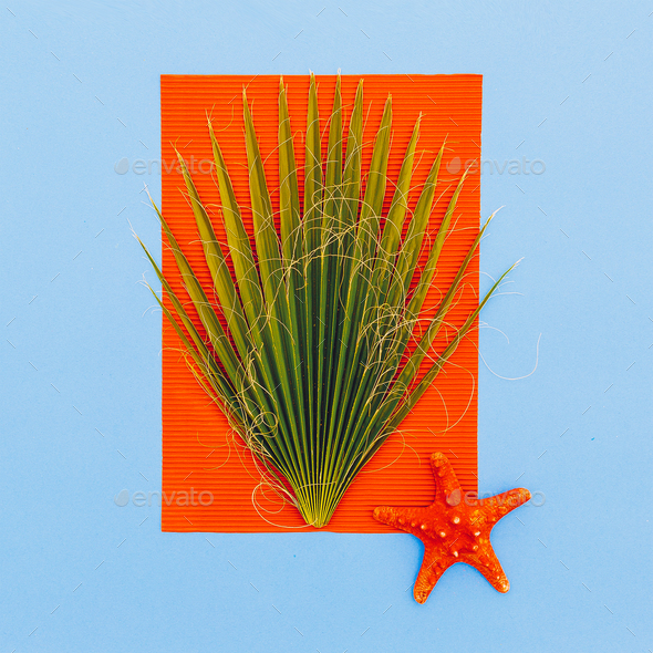 Marine tropical style. Palm tree and starfish. Minimal art - Stock Photo - Images