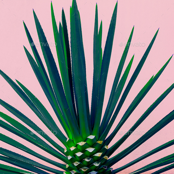 Palm tree on the pink. Tropical design minimal fashion - Stock Photo - Images
