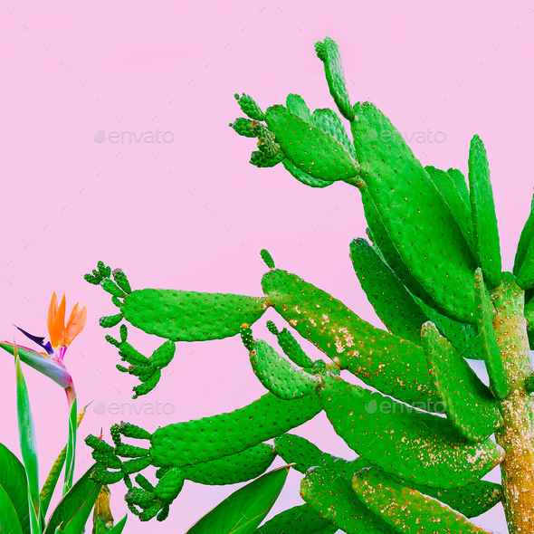 Plant on pink. Outdoors. Minimal fashion design. Plants lover. G - Stock Photo - Images