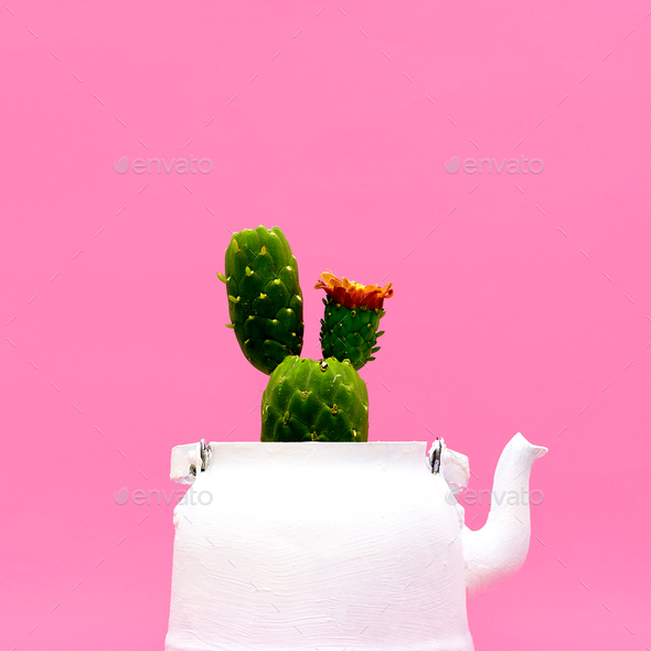 Cactus in a teapot. Minimal style design - Stock Photo - Images