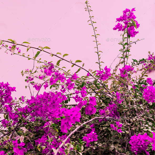 Tropical flowers on a pink. Bloom. Minimal art fashion - Stock Photo - Images