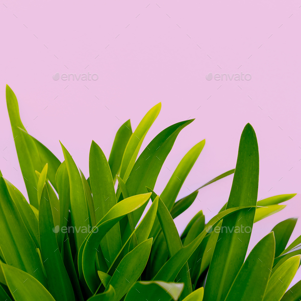 Modern art. Plant lovers. Plant on pink. minimal ideas - Stock Photo - Images