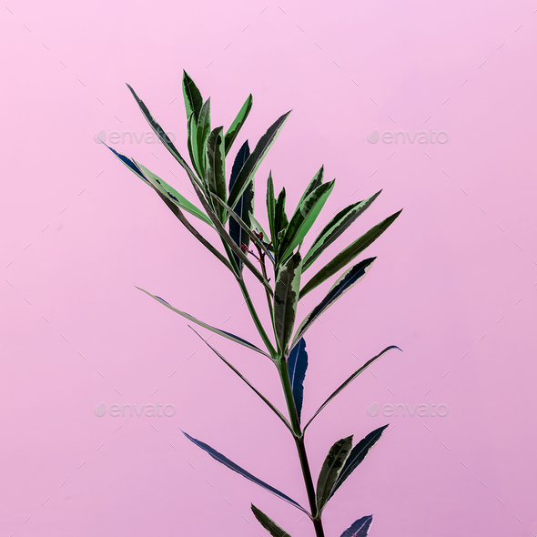 Plant on a pink minimal design fashion - Stock Photo - Images