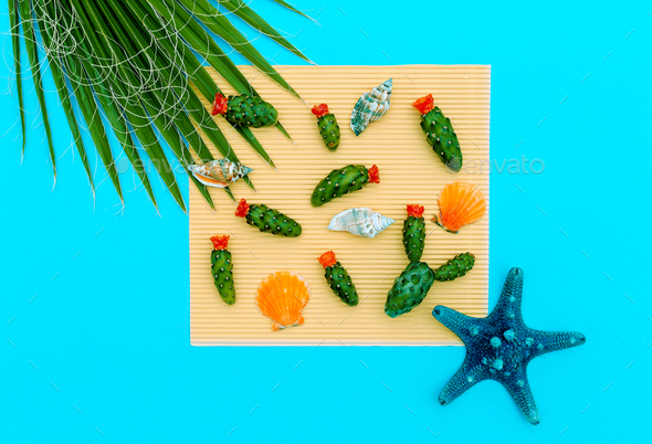 Sea Set Mini Cactus and seashells. Minimal art design details - Stock Photo - Images