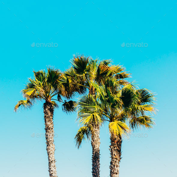 Palms. Canary Islands. Minimal - Stock Photo - Images