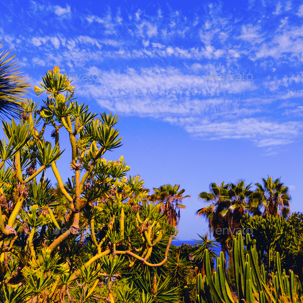Tropical green background. Palms and cacti. Canary Islands. Tene - Stock Photo - Images