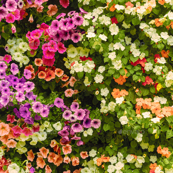 Floral background Minimal art design - Stock Photo - Images