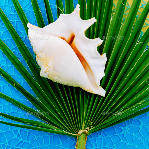 Shell and palm tree. Vacation set - Stock Photo - Images