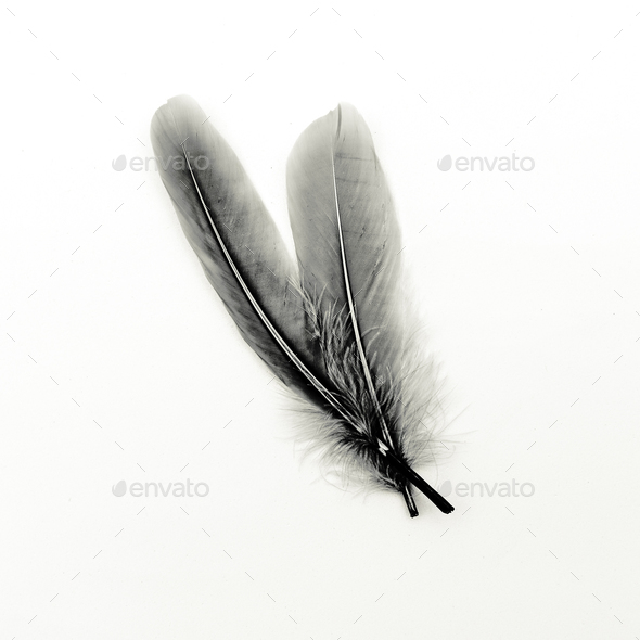 Feathers black and white art gallery - Stock Photo - Images