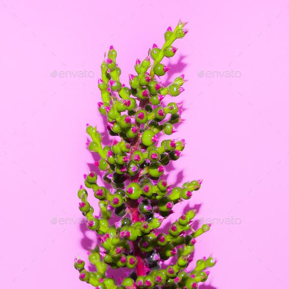 Minimal art. Exotic Plant on  pink. Stylish design  fashion - Stock Photo - Images