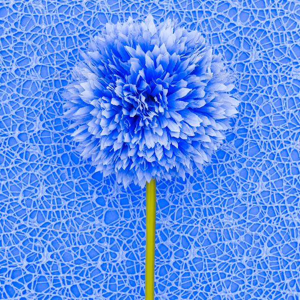 Blue flower. Minimal fashion style - Stock Photo - Images