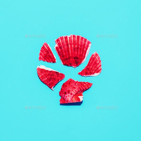 Shell fragments Minimal art design - Stock Photo - Images