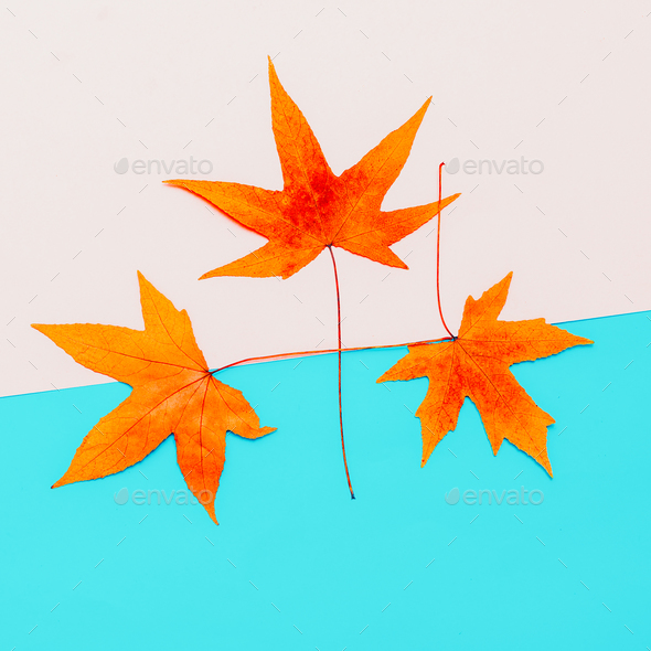 Set Leaf Autumn season Minimal art design - Stock Photo - Images