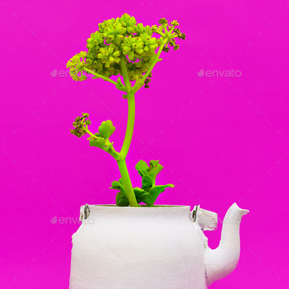 Tropical plant in a teapot. Minimal style - Stock Photo - Images