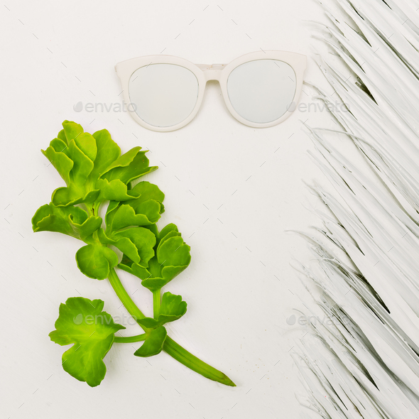 Tropical plant and sunglasses. White Minimal Style - Stock Photo - Images
