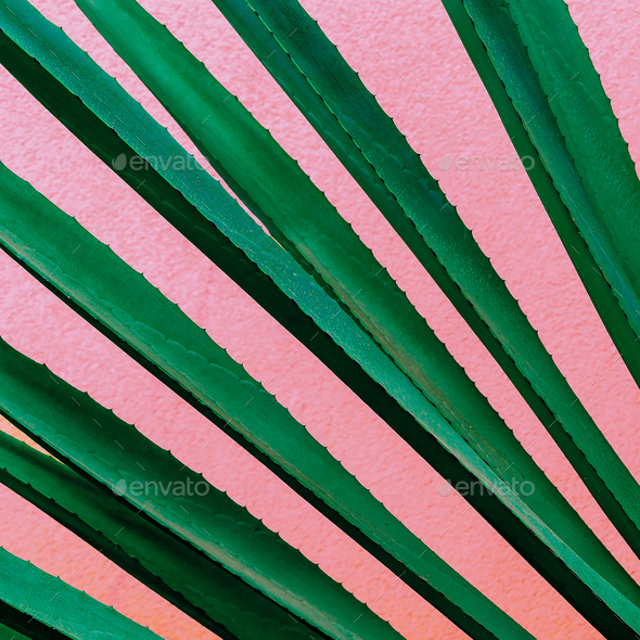 Plant on pink. Tropical design minimal fashion art Green lover - Stock Photo - Images