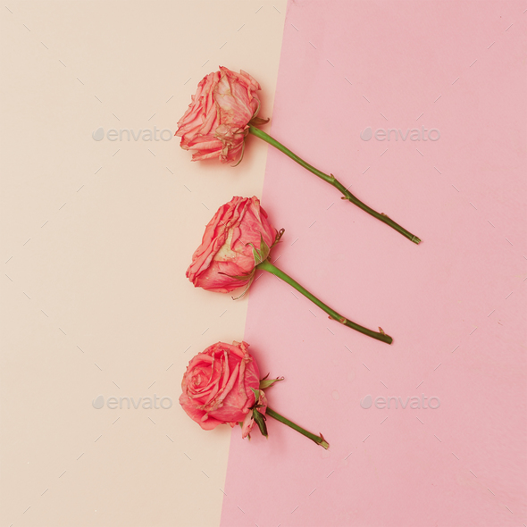 Minimal creative design. Rose on pastel background. Art Help - Stock Photo - Images