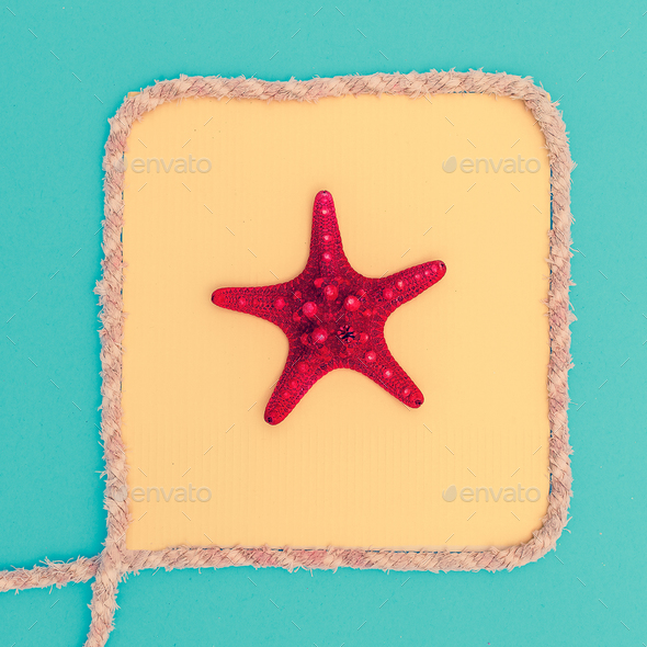Starfish in a frame. Beach style. Minimal - Stock Photo - Images