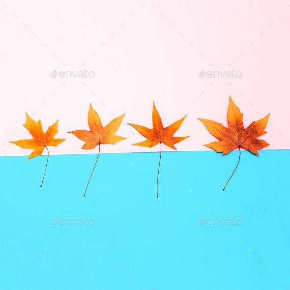 Set Leaf Autumn season Minimal art - Stock Photo - Images