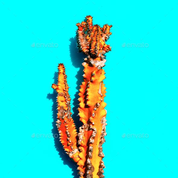 Orange cactus. Creative design. Minimal art gallery - Stock Photo - Images