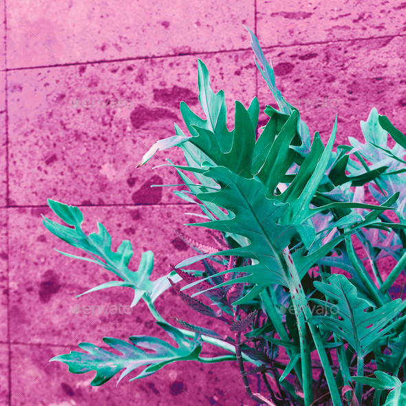 Plant on pink. Pink wall. Minimal street art - Stock Photo - Images