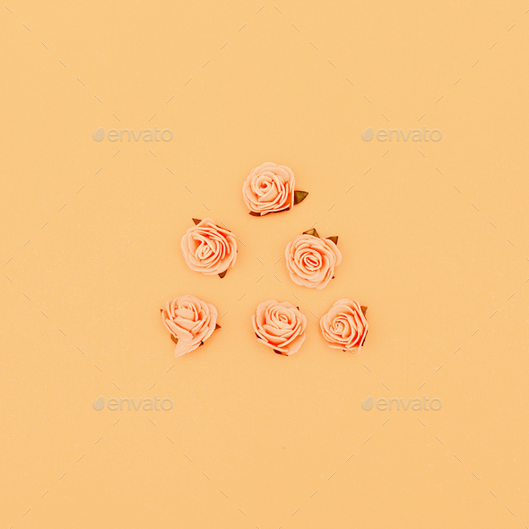 Roses on a pastel background. Candy colors Minimal art - Stock Photo - Images