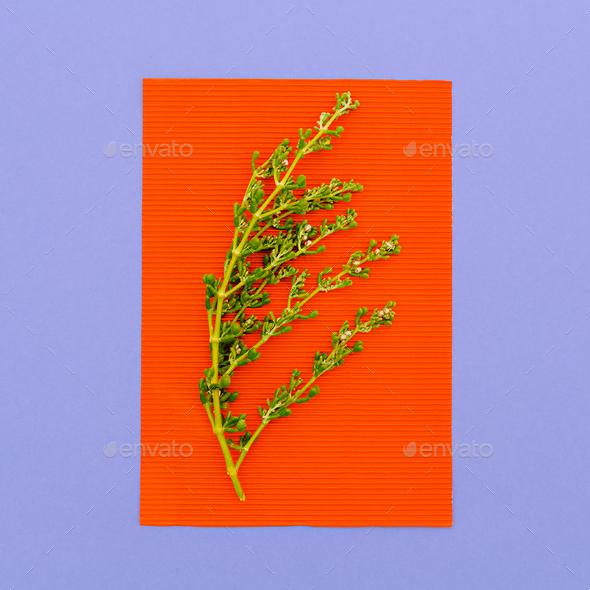 Plant Minimal art design - Stock Photo - Images