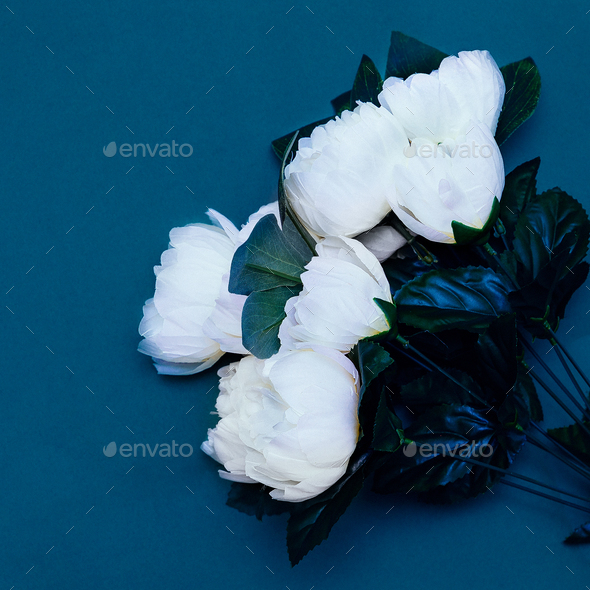 Plastic white roses. Minimal art - Stock Photo - Images